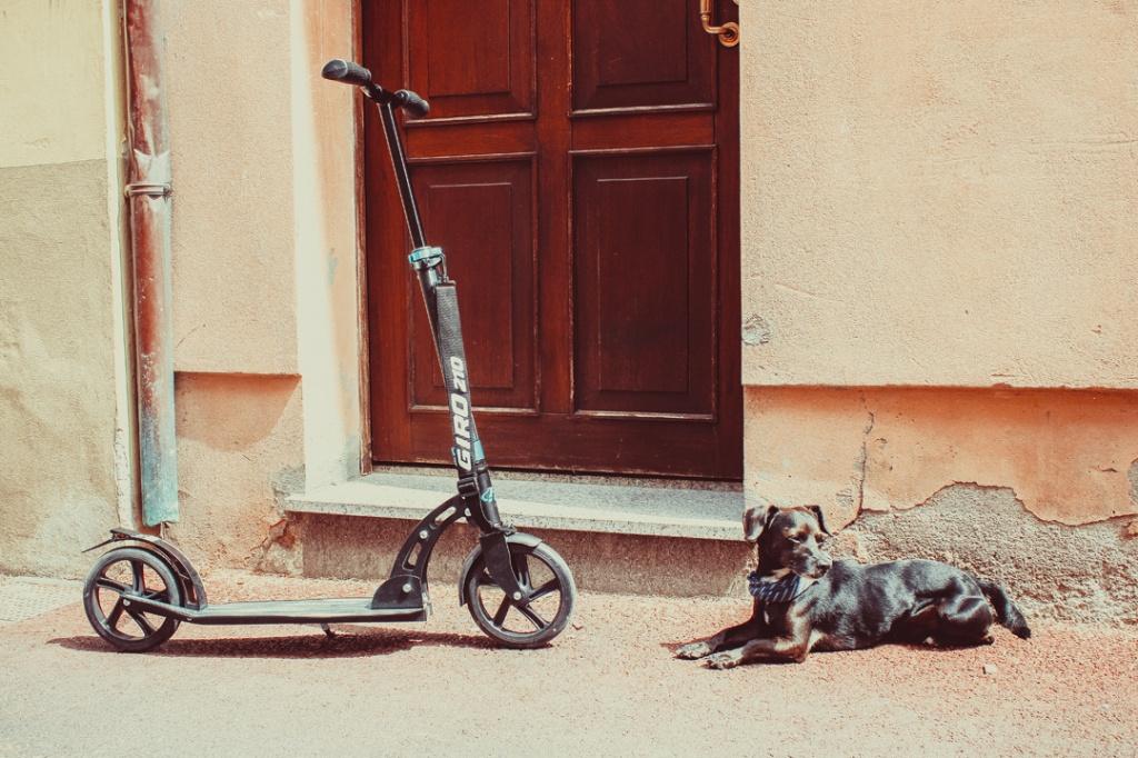 Собака на самокате.jpg